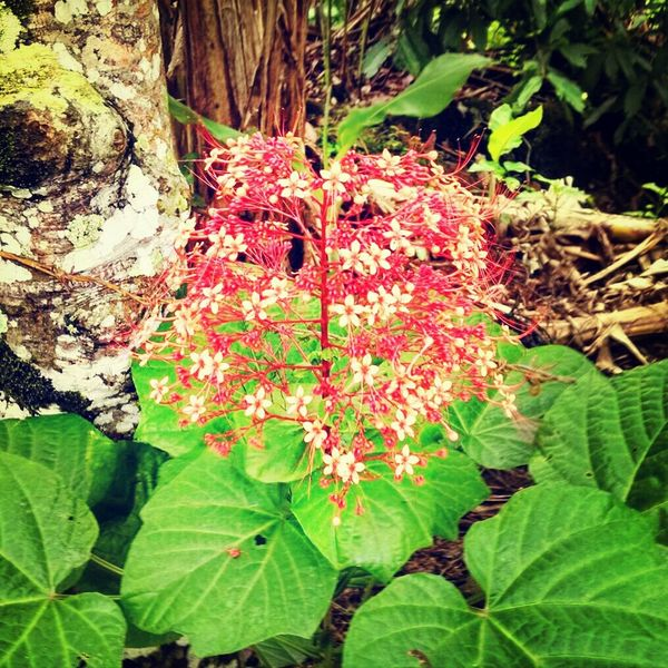 Flowers Flores Nature Naturaleza