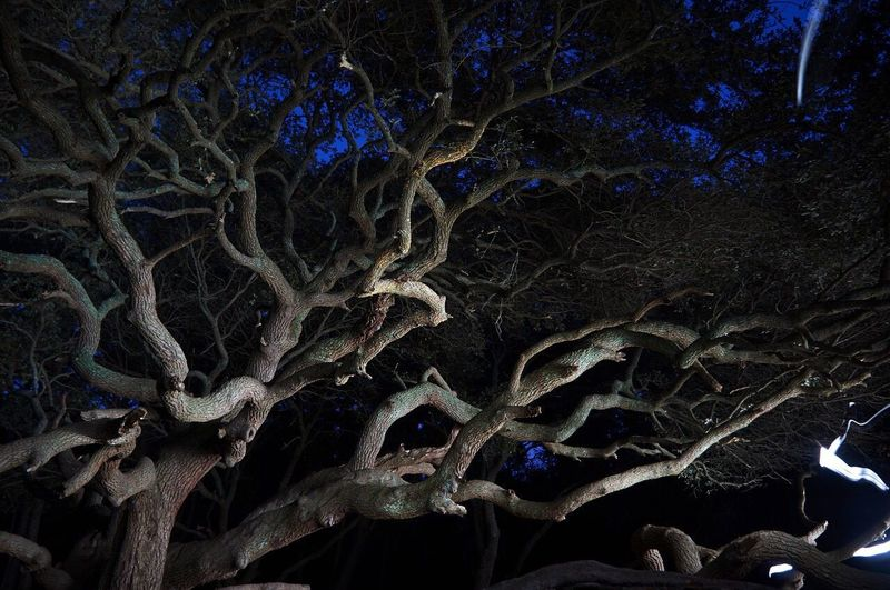 Sprawling Branches Trees Outdoors Night Branches Branch Light And Shadow Nature No People Long Exposure
