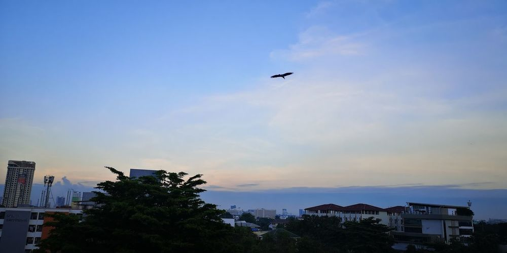 Silhouette of bird flying over buildings in city
