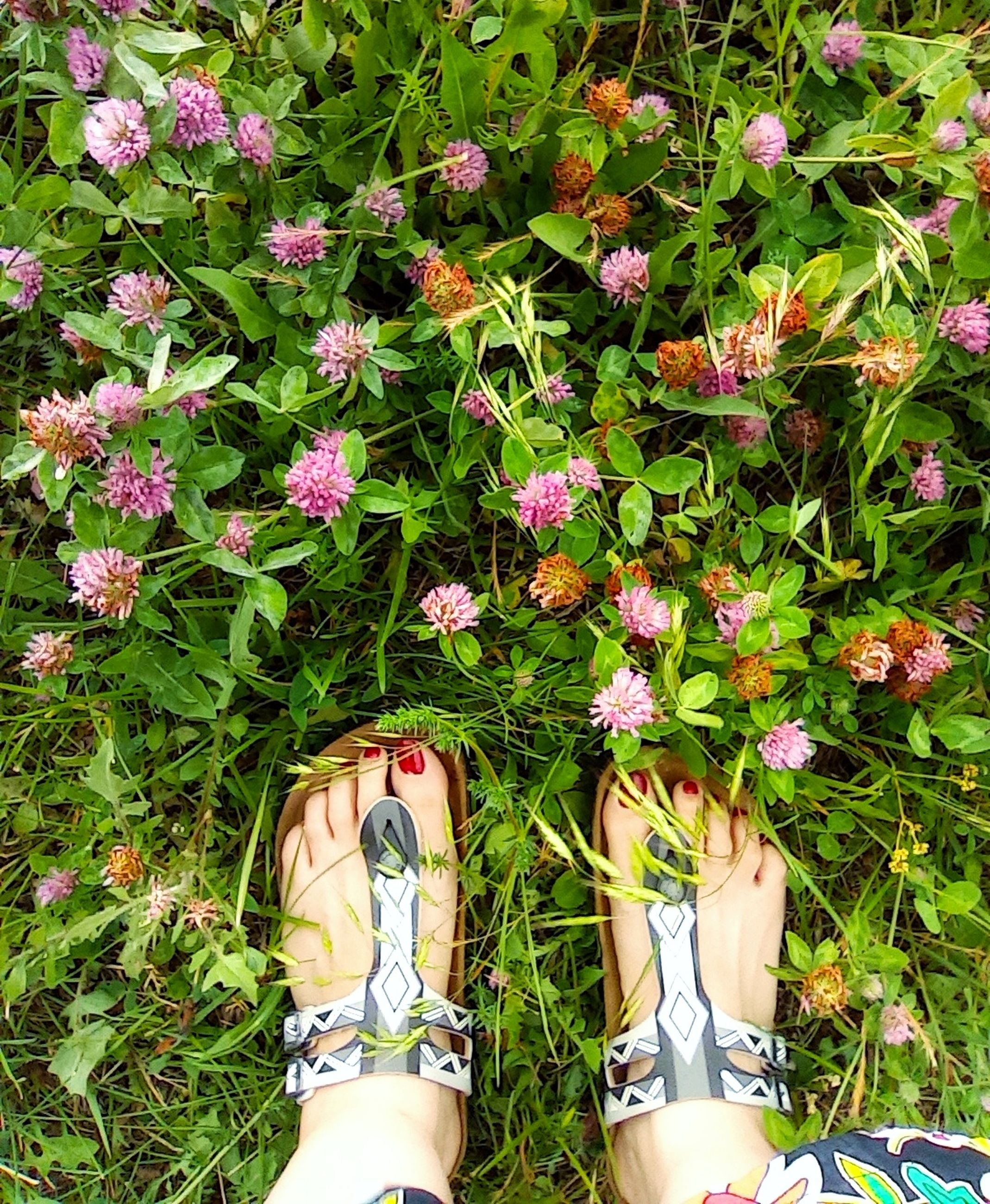 plant, human leg, low section, personal perspective, one person, flower, shoe, nature, high angle view, flowering plant, standing, day, lifestyles, grass, growth, green, beauty in nature, women, leisure activity, limb, freshness, directly above, human limb, outdoors, field, land, adult, human foot, lawn, sandal, garden, fragility