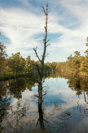Dead tree Moor  Moorland Dead Deadtree Deadtrees Reflections Reflection Reflection_collection