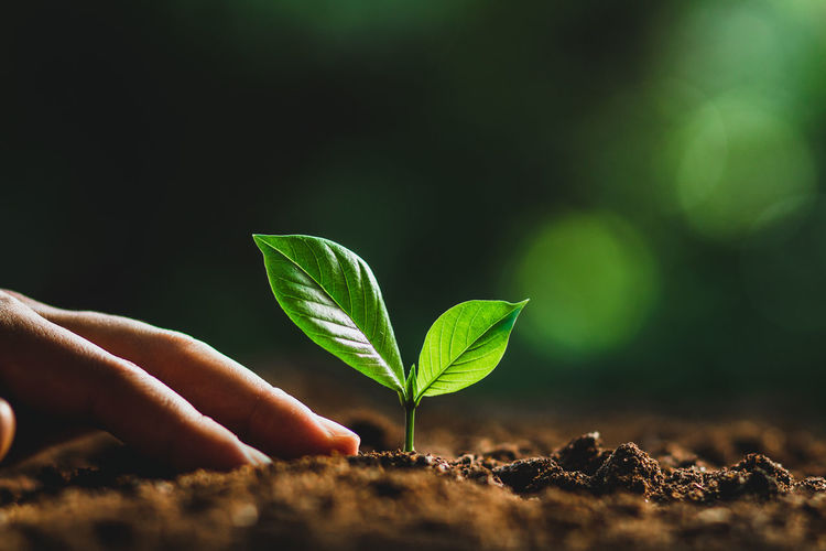 Cropped Image Of Person Planting Seedling On Dirt