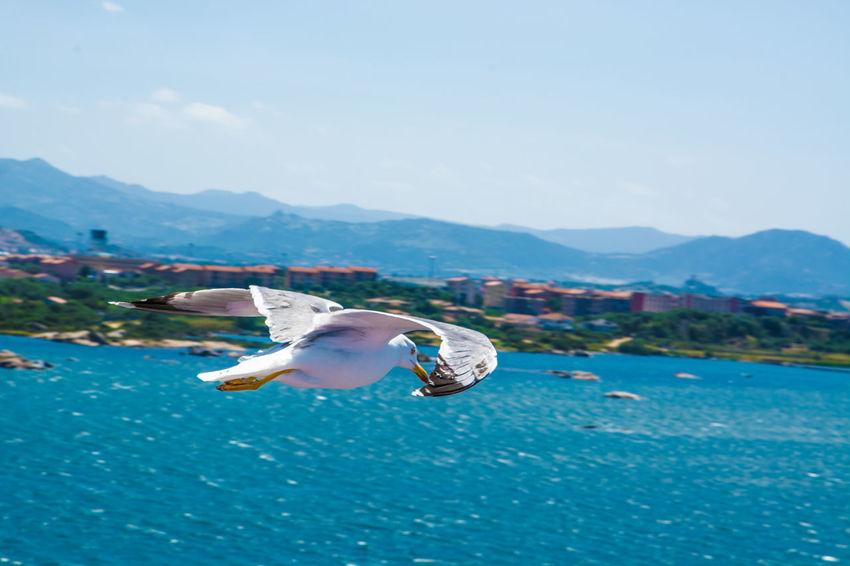 Bird Birds Flying High Gabbiano Sea Seagull