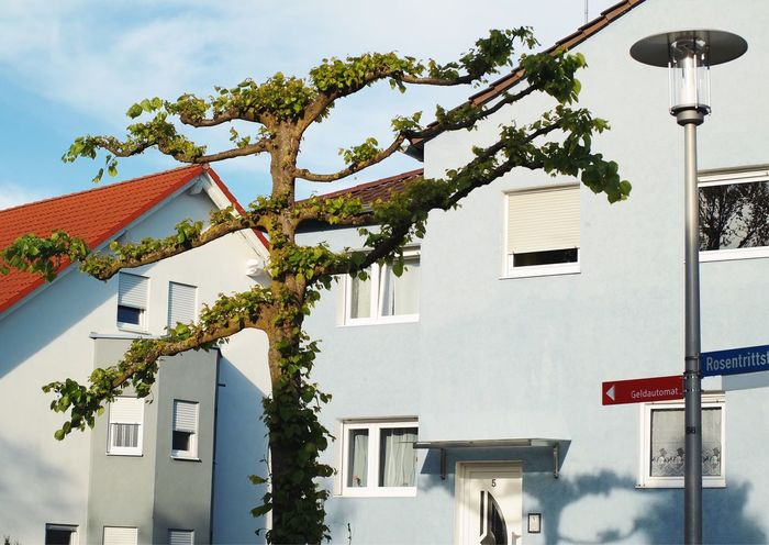Dancing tree 🍃... Architecture Building Exterior Built Structure Low Angle View House Outdoors Tree My Favorite Photo Found On The Roll Vscocam Details Of My Life Nature Green Color Tree Trunk Odd Germany Nature On Your Doorstep Nature_collection Adapted To The City The Architect - 2017 EyeEm Awards
