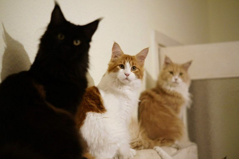 Cats sitting at home