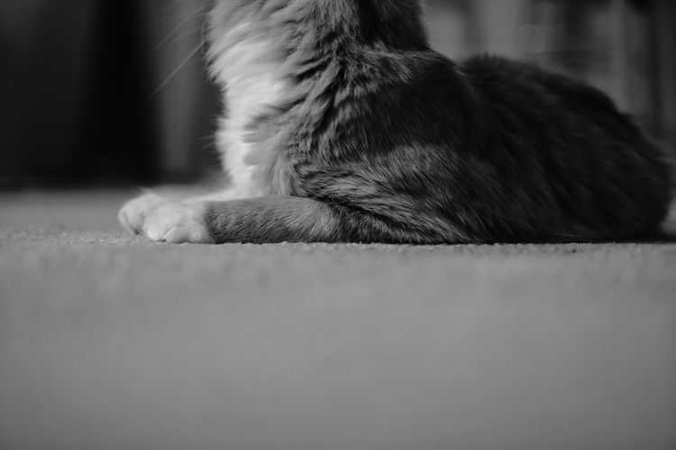 Close-up of a cat at home