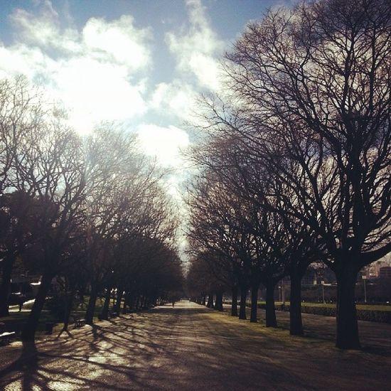 Lisbon Trees Sun