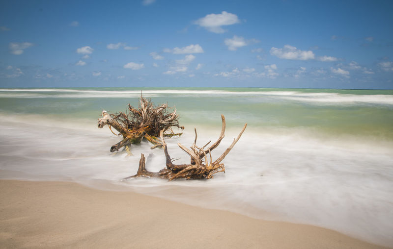 Scenic view of driftwood on beach against sky