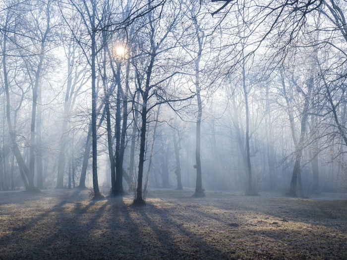 Beauty In Nature Branch Day Fog Forest Landscape Nature No People Outdoors Scenics Tranquility Tree Tree Trunk Winter