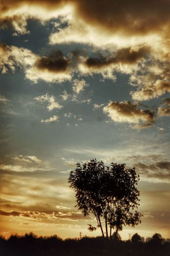 Beauty In Nature Branch Cloud - Sky Growth Idyllic Landscape Low Angle View Nature No People Non-urban Scene Orange Color Outdoors Plant Scenics - Nature Silhouette Sky Sunset Tranquil Scene Tranquility Tree