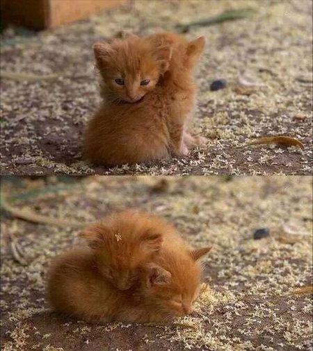 Carente  Loving Cat My Heart Beat