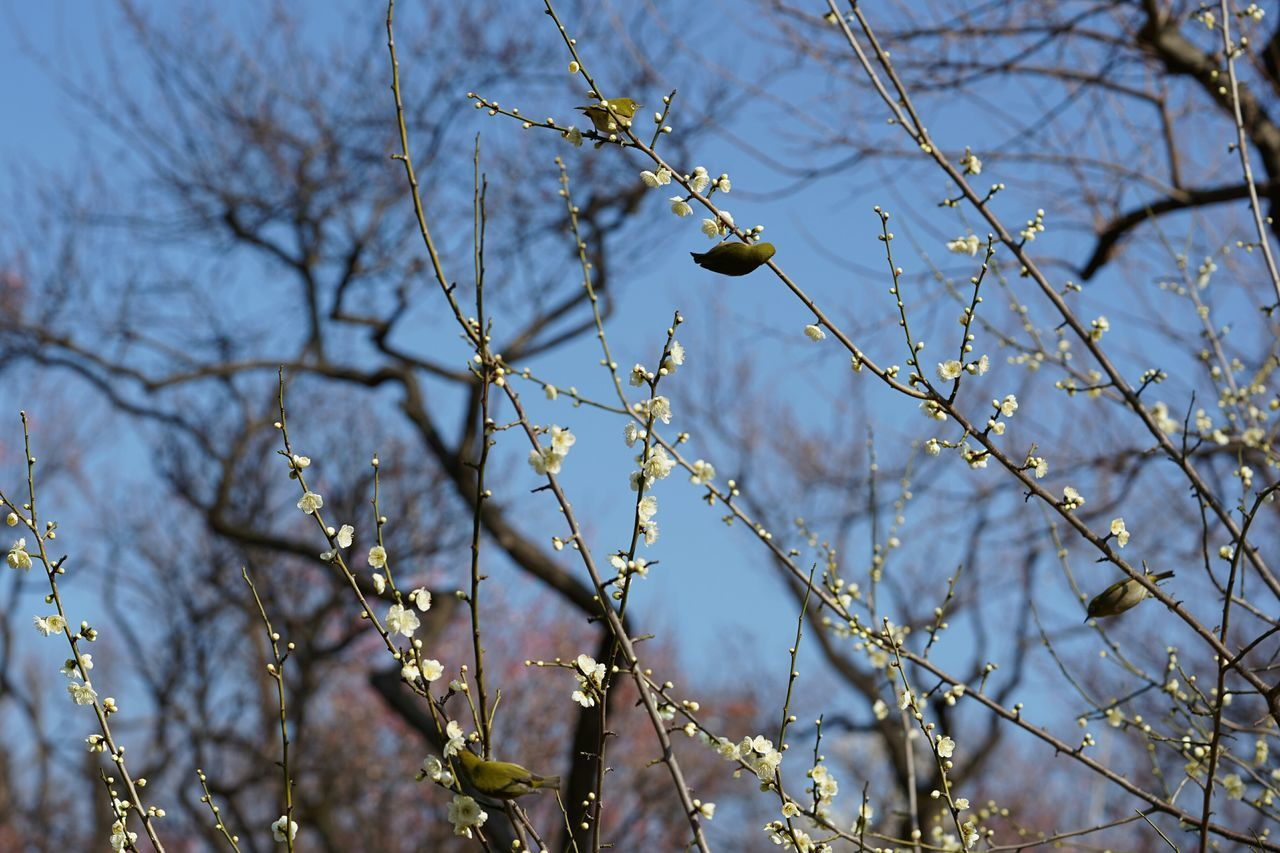 branch, tree, flower, nature, twig, growth, beauty in nature, day, no people, outdoors, fragility, focus on foreground, freshness, springtime, catkin, close-up, flower head, sky