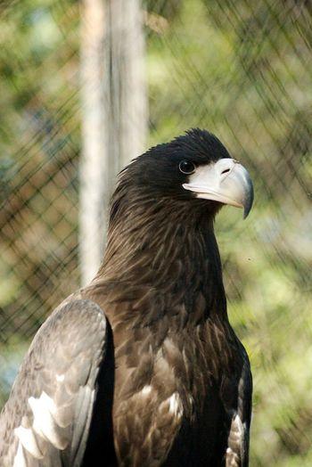 Predatory Bird Zoo Photography  Zoo Animals  Animal Bird Zoo Raven