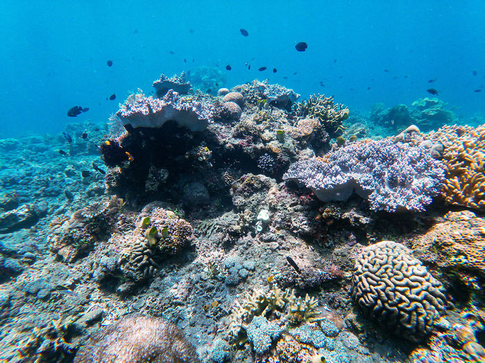 Several fish colonies on coral reefs