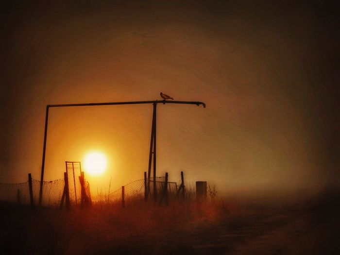 Sunset Orange Color Beauty In Nature Tranquility Silhouette No People Illuminated Sky Colors Nature Animals In The Wild Bird Dramatic Sky Cloud - Sky Flock Of Birds Fog Foggy Mist One Animal Long Goodbye