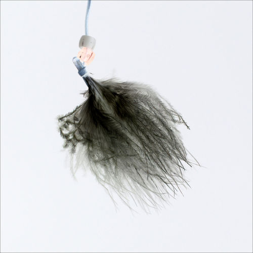 Feather  Hanging Negative No People White Background
