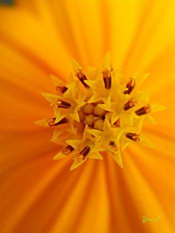 No edit Macro Clique Macro Photography EyeemPhilippines Flower Porn