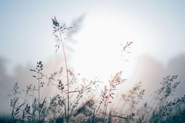 This foggy