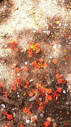 Petalos Falling Leaves Orangeleaves