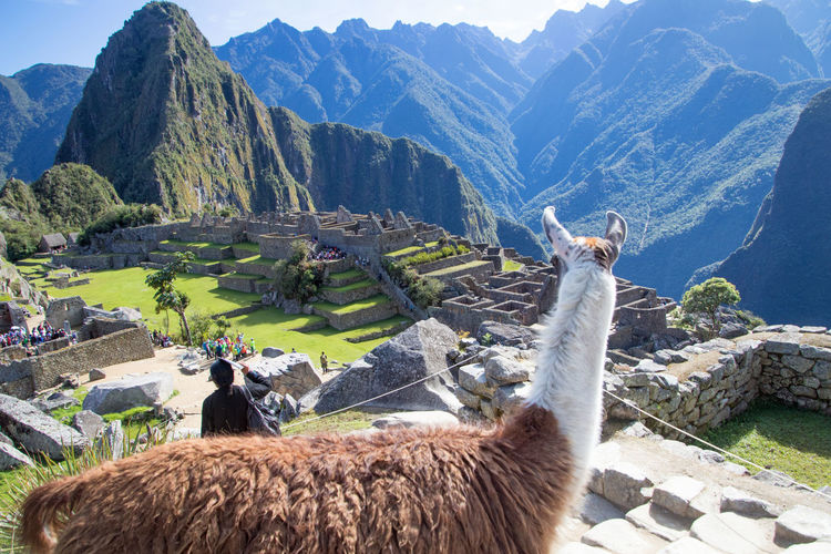 Side view of llama on mountain