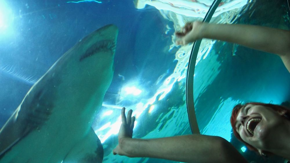 Aquarium Aquarium Life Aquariumfish Blue Human Finger Joy Joyful Moments Lifestyles Person Shark Underwater Connected By Travel