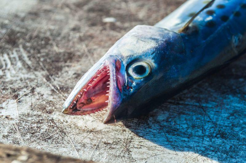 Poor Fish First Eyeem Photo Fish Florida Sea Food Animal
