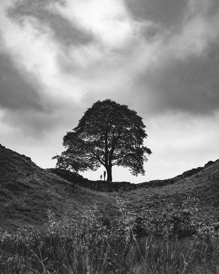 family tree Check This Out Copy Space EyeEm Best Shots EyeEm Nature Lover Family Love Natural Beauty Nature Beauty In Nature Blackandwhite Day England Family Time Family With One Child Grass Landscape Monochrome Nature Nature_collection Outdoors Sky Tranquility Tree