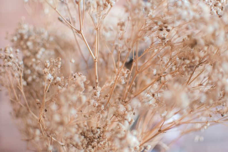 EyeEm Selects No People Nature Plant Full Frame Day Backgrounds Beauty In Nature Growth Close-up Pattern Brown Outdoors Fragility Tranquility Agriculture Vulnerability  Softness Selective Focus Beige Crop