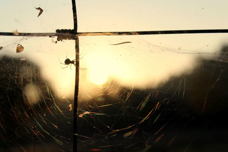 Spider Web Close-up Fragility No People Glass - Material Window Nature Water Cracked Broken Drop Focus On Foreground Full Frame Sky Damaged Vulnerability  Sunset Wet Backgrounds Outdoors Glass Rain Deterioration Web