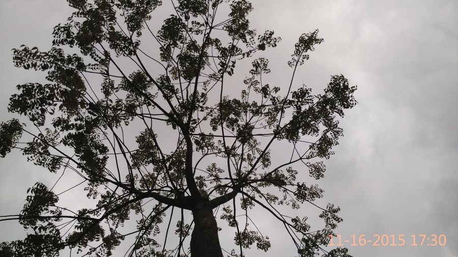 Cool Weather Nature Tree