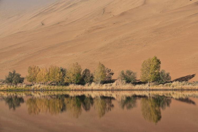 1204 sumu jaran lake's western megadune reflected on mirroring water. badain jaran desert-china.