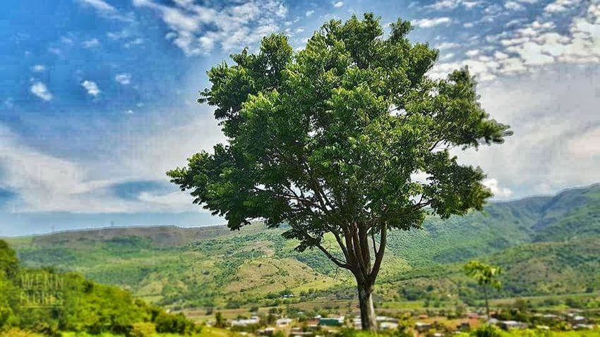Árbol Arboles En Flor Arbol Solitario Naturaleza Maravillosa Mexico <3 Tree Cellphonephotography Nature_collection Samsung Galaxy S7 Edge Tree Nature Sky Cloud - Sky Landscape Scenics Beauty In Nature Growth Green Color Mountain Outdoors Rural Scene Palm Tree Field Day Tranquil Scene Tranquility