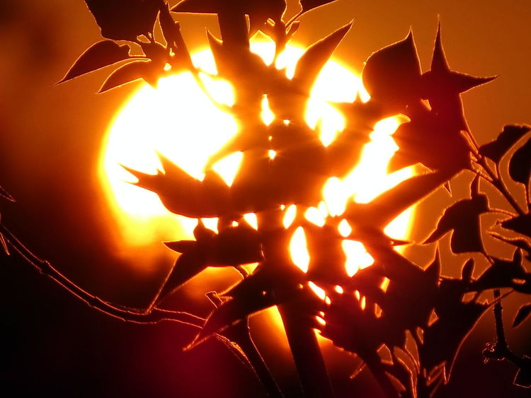 Burning Close-up Flame Night No People Orange Color Outdoors Sunset