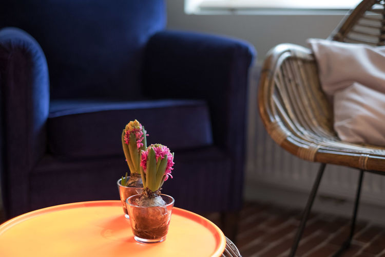 Close-up of potted plant on table in restaurant