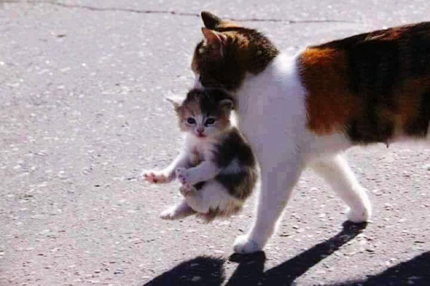 Cat Cat♡ Cat Lovers Kittens Animal Love
