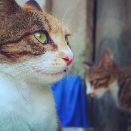 A portrait of two domestic cats