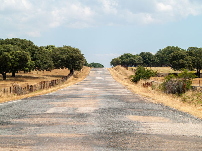 Empty road along plants and trees against sky