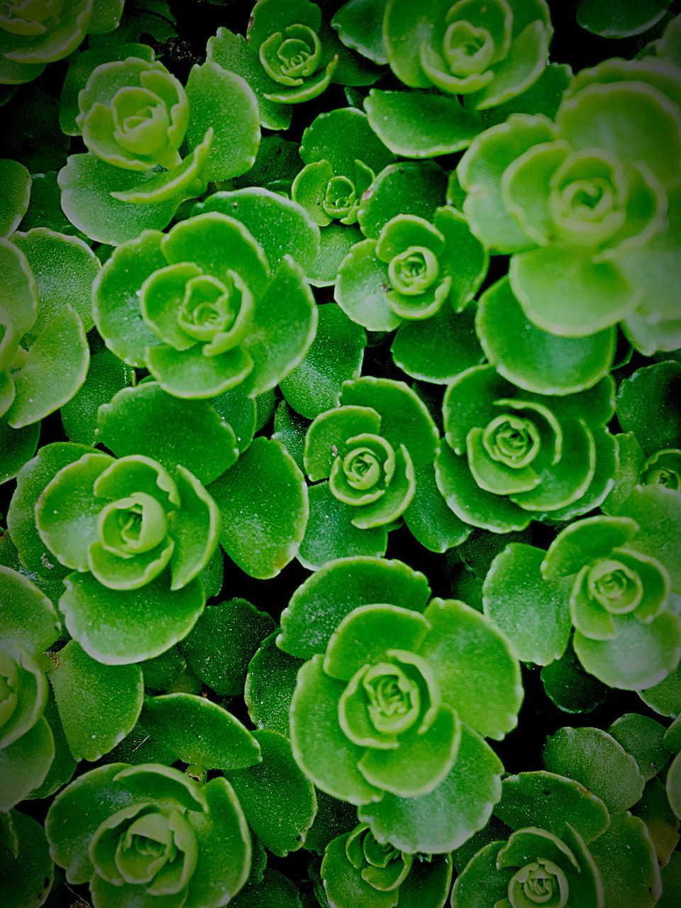 Directly Above Shot Of Succulent Plants