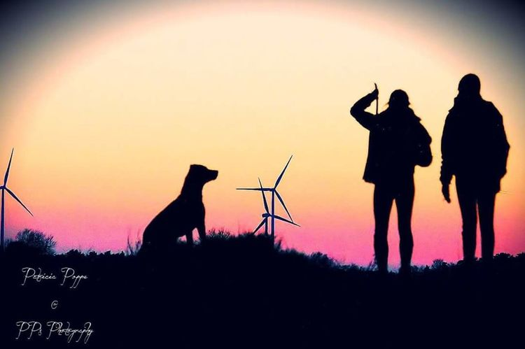 Silhouette in the sunset Silhouette Sunset Dog One Animal Animal Animal Themes Sky People Beauty In Nature Nature Outdoors Friendship Nature Hi! Enjoying Life Hello World Love❤ Check This Out EyeEm Team Eyeemphoto Magical Doughter  Silhouette Photography Silhouettes Of People Silhouettephotography