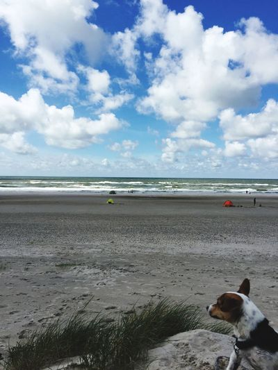 Sea Beach Dog Sky Pets Water Cloud - Sky Horizon Over Water One Animal Outdoors Sand Nature