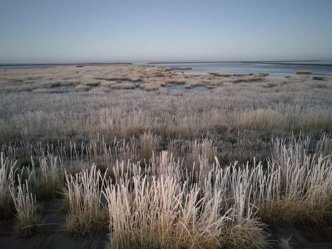 Nordsee Cuxhaven Watt Alone Frozen Frozen Beach Silence Seegras Strand Tranquility Horizon Over Water Rural Scene Beach Travel Destinations Tranquil Scene Beauty In Nature Landscape Outdoors Grass Water Scenics Growth Flower No People Sky Close-up Day Nature
