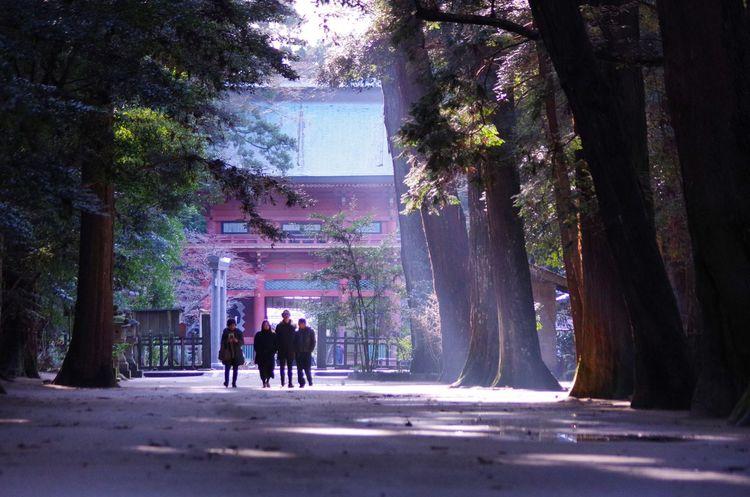鹿島神宮 kashima jingu (japan) Shinto Shrine Japan Snapshot Snap PENTAX KP Pentax Photgraph Photography Tree Real People Walking Silhouette Road Full Length Nature