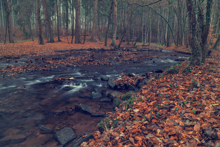 River in the forest in autumn. Art Beauty In Nature Backgrounds Tree Forest Land Autumn Plant Nature Change Tranquility Plant Part No People Day Leaf Water Scenics - Nature Tree Trunk WoodLand Tranquil Scene Non-urban Scene Stream - Flowing Water Outdoors Leaves Flowing Water Flowing Fall