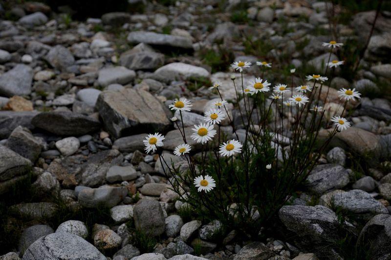 Kejimkujik National Park, Nova Scotia - flowers in rocks Flowers, Nature And Beauty Rocks