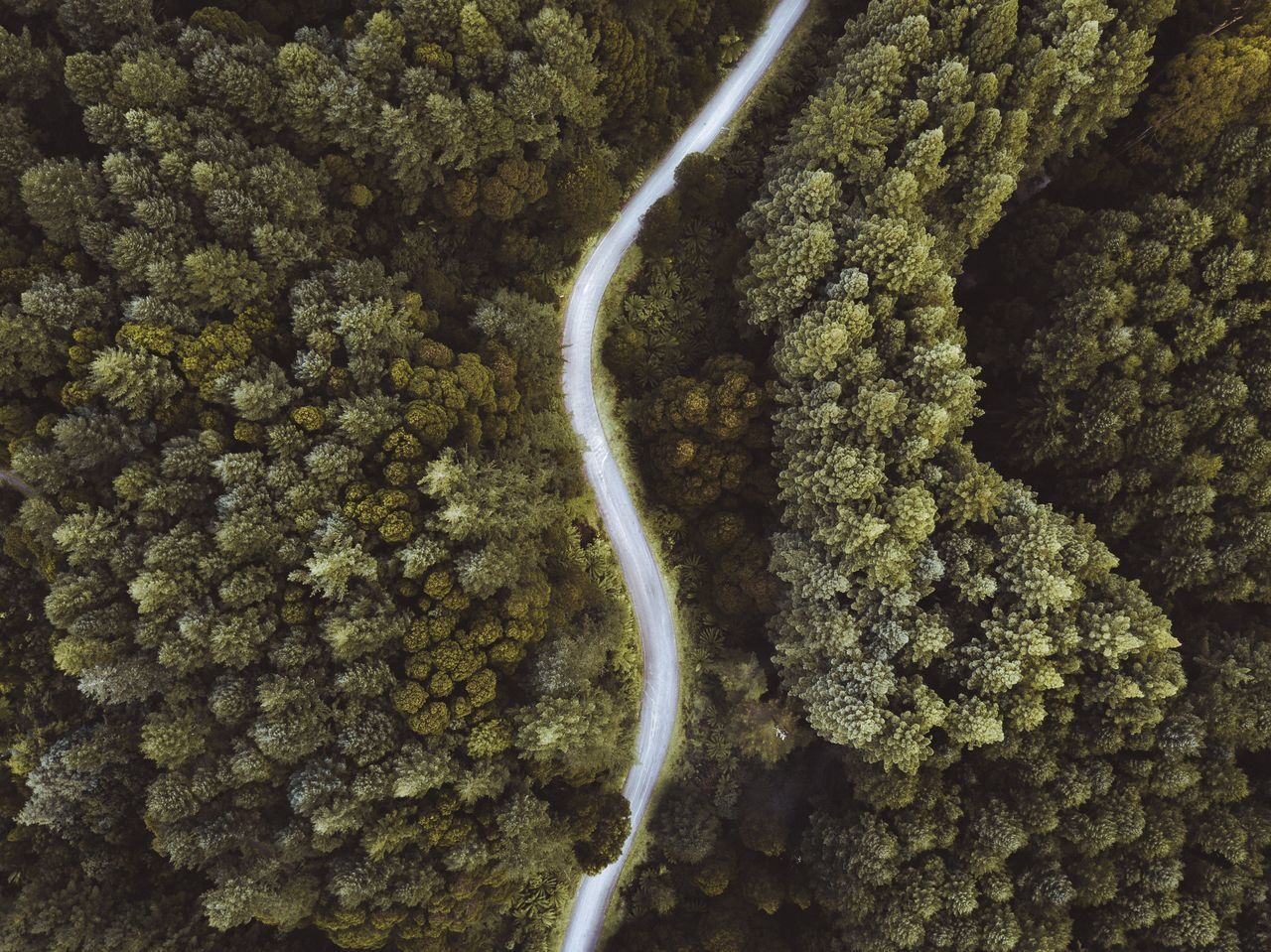 Close-Up,  Curve,  Day,  Drone Point Of View,  Forest
