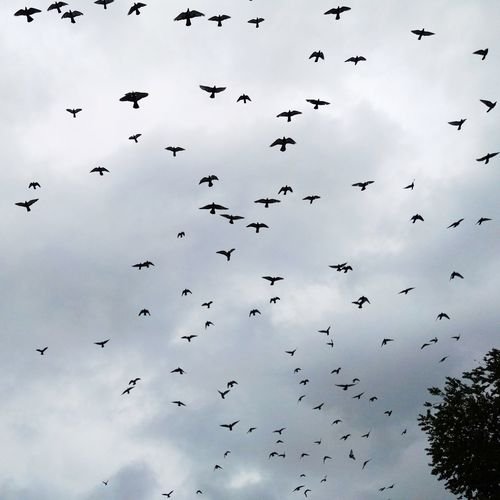 Rasht Sky And Clouds Bird Flying Bird
