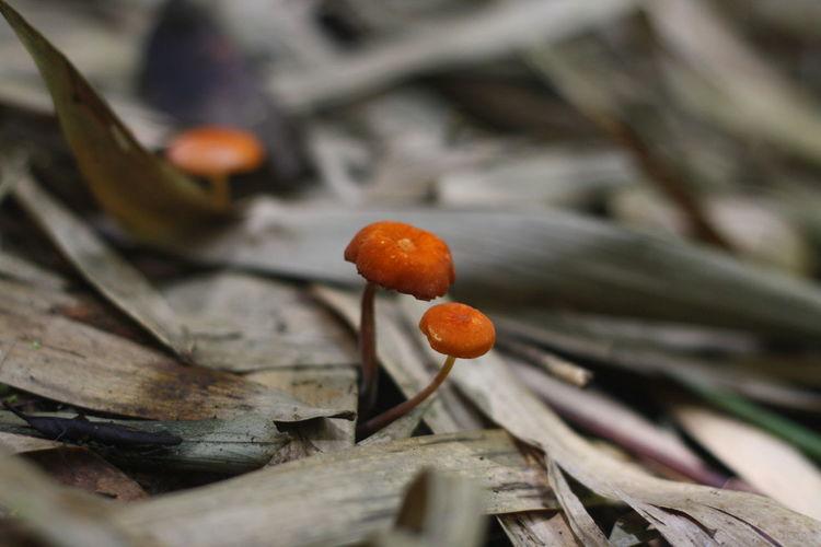 Close-up of orange mushrooms growing outdoors