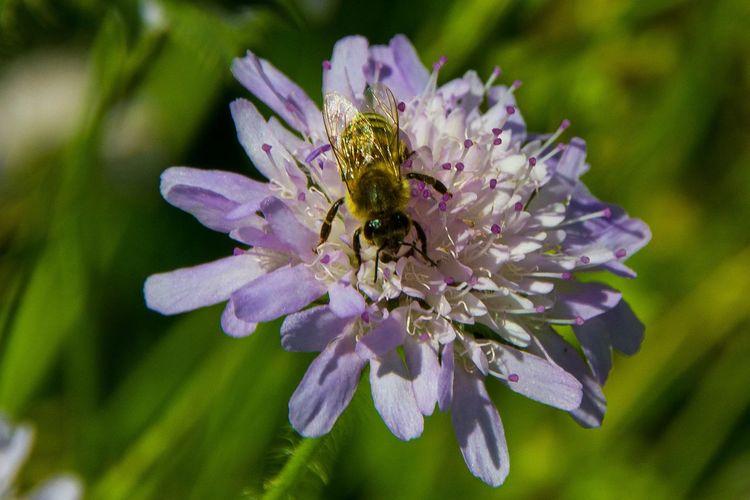 Bee EyeEm