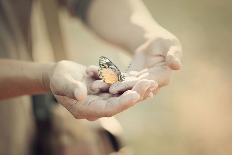 Beautiful butterfly sitting on the hand Animal Wildlife Animal Wing Animals In The Wild Body Part Butterfly - Insect Close-up Day Finger Flower Focus On Foreground Hand Holding Human Body Part Human Hand Insect Invertebrate One Animal One Person Outdoors Real People