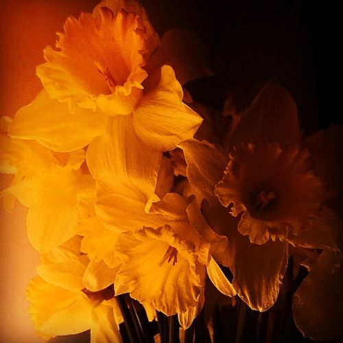 Narcissus Flowers Insta Instagood plants photooftheday swag Spring Saturday Serbia Dobracina floral Freshness hipster Belgrade Beograd nature